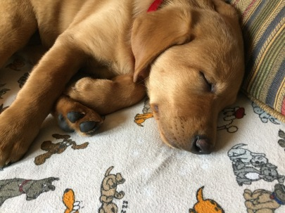 doggybedsheets